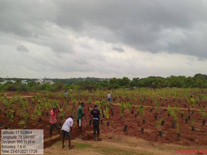 కేటీఆర్ బర్త్ డే : ముక్కోటి వృక్షార్చనకు ఏర్పాట్లు పూర్తి